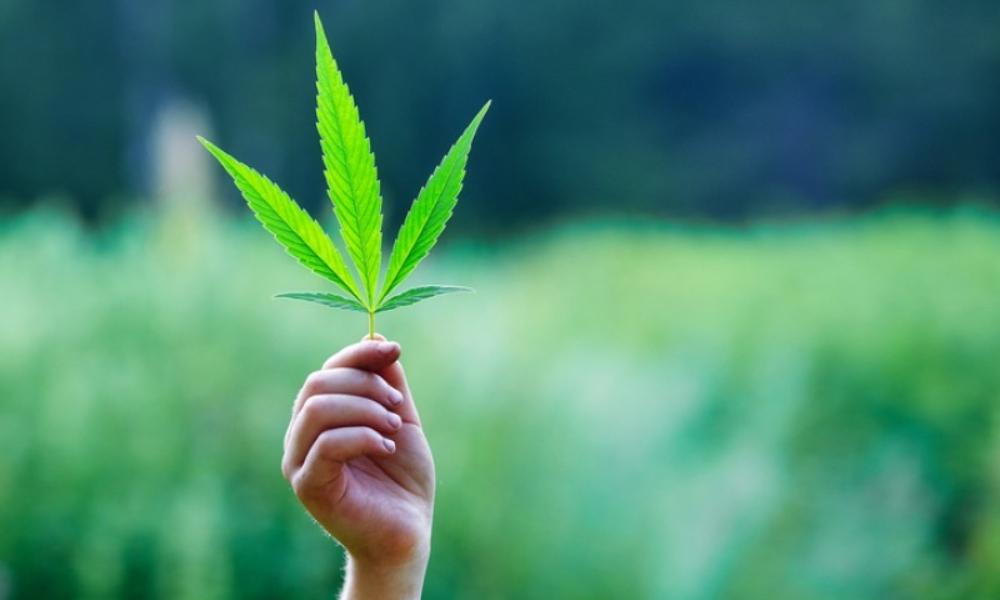 marihuana-cannabis