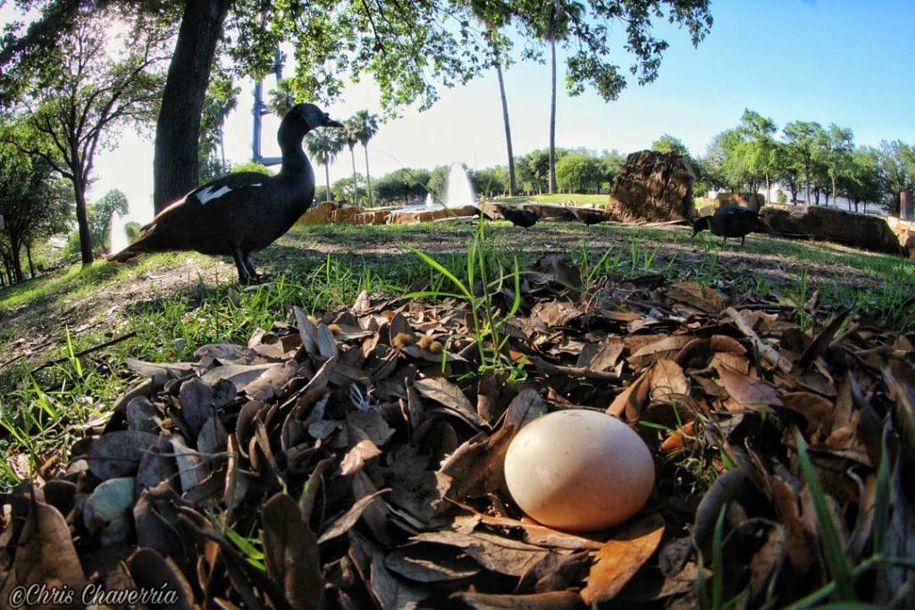 Patos-fundidora-monterrey