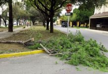 tala-arboles-delitos-ambientales-nuevo-leon-monterrey