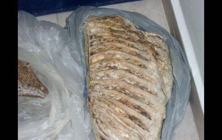 huesos de mamtu descubiertos tras el huracan alex