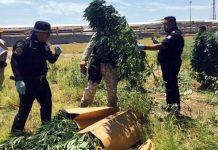 marihuana-pemex-cadereyta