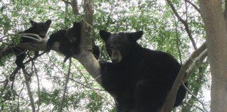 osos-monterrey-nuevo-leon