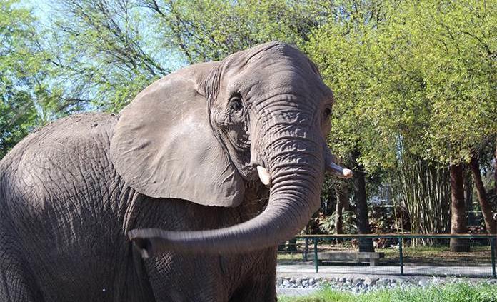 pancha-elefanta-la -pastora