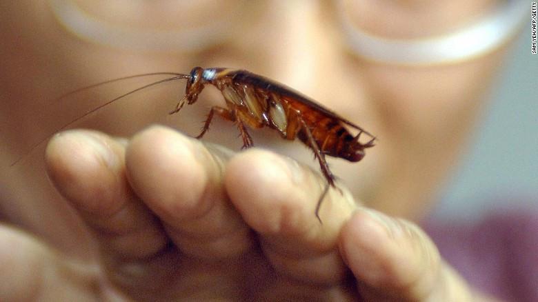 cnn-cucaracha