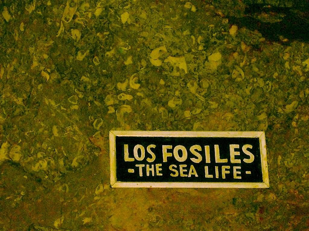 grutas-de-garcia-fosiles