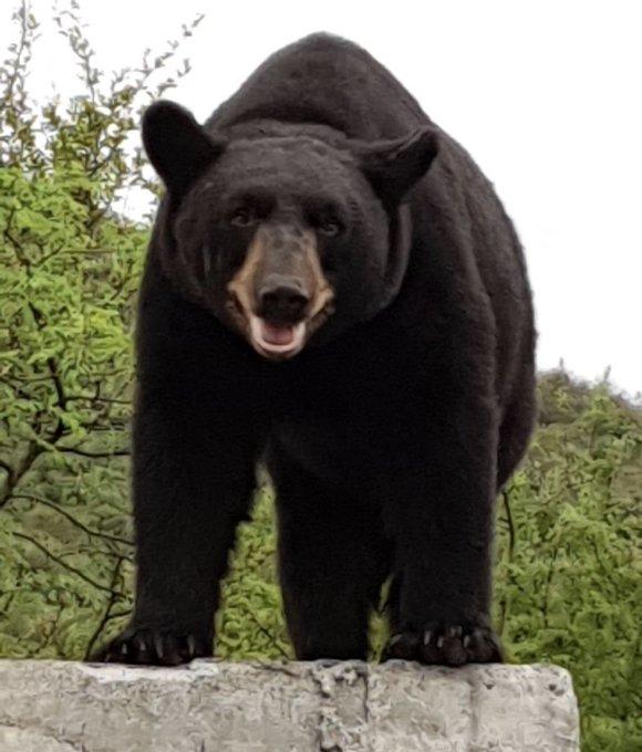 oso-mederos