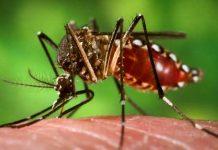 dengue-nuevo-leon