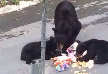 osos-oso-plastico-monterrey-san-pedro-chipinque-mederos