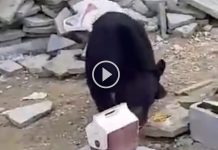 video-oso-allende