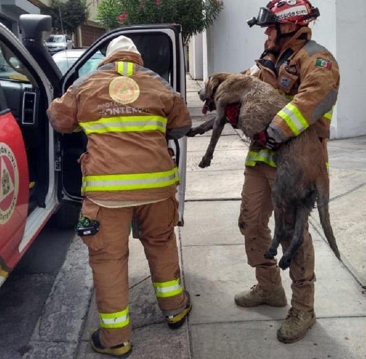 bomberos-proteccion-civil-rescatan-perro-monterrey