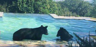 osos-san-pedro-video-monterrey-nuevo-leon