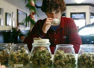 catador-marihuana-