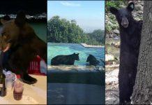 Se incrementan avistamientos de osos en zonas habitadas en Nuevo León