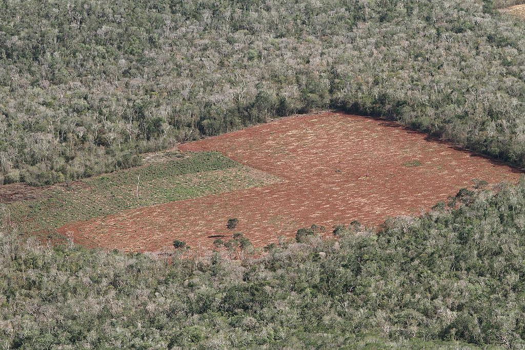 deforestacion-alfonso-romo