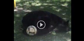 oso-san-pedro-nuevo-leon (1)