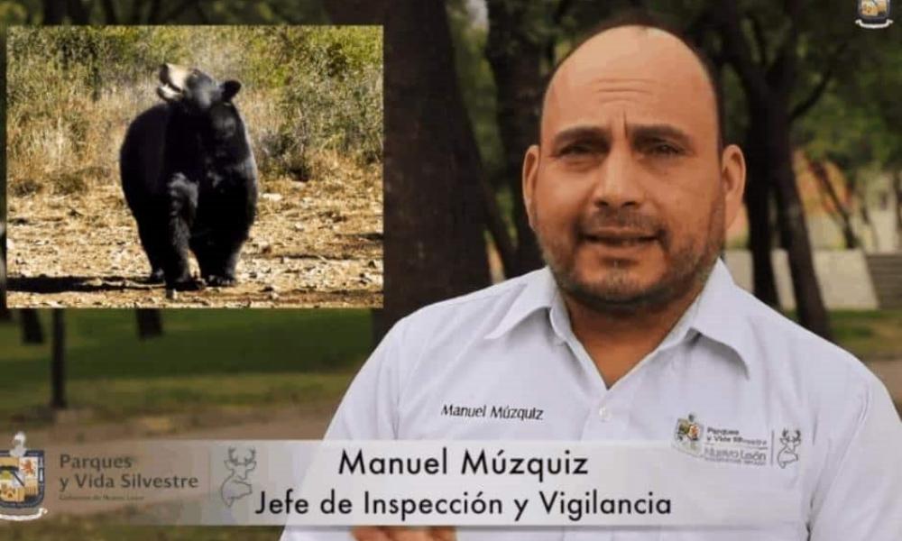 """¿Llegó el """"avispón asesino"""" a Monterrey?"""
