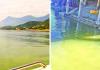 Agua de la presa La Boca ¡se pinta de verde!