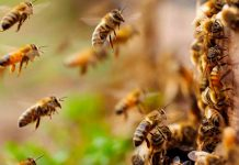 Fallece hombre tras ataque de abejas