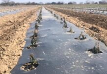 Frío extremo golpea a agricultores de NL